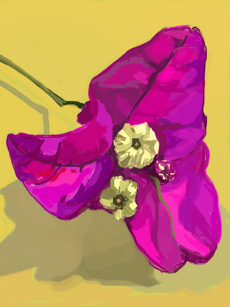 Sally Parnis, 'Bougainvillea', 2016, digital painting. Courtesy the artist.