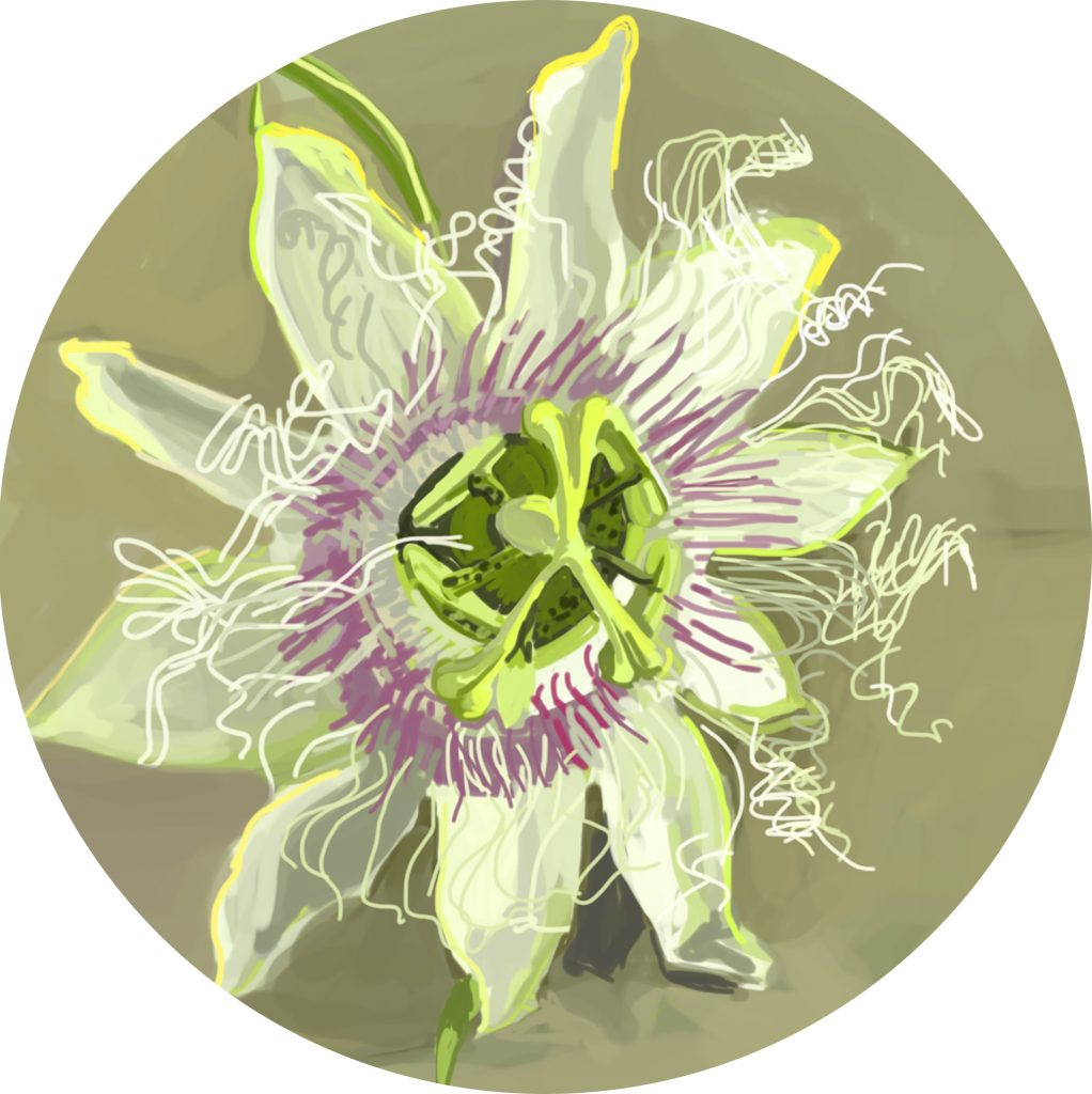 Sally Parnis, 'Round passion flower', 2016, digital painting. Courtesy the artist.