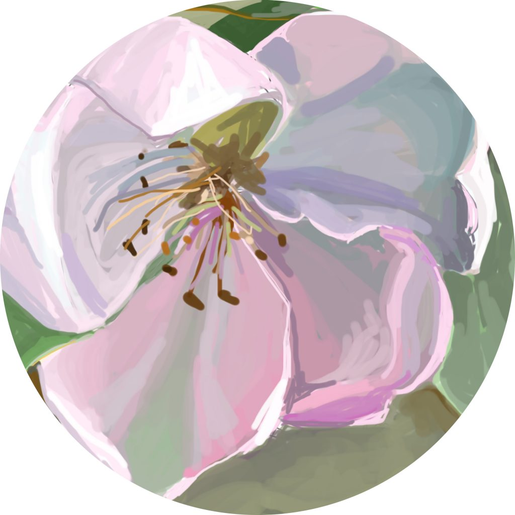 Sally Parnis, 'Round quince', 2016, digital painting. Courtesy the artist.